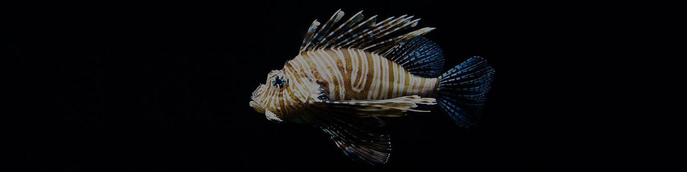Feuerfisch Wasserbuch Dana Ranga